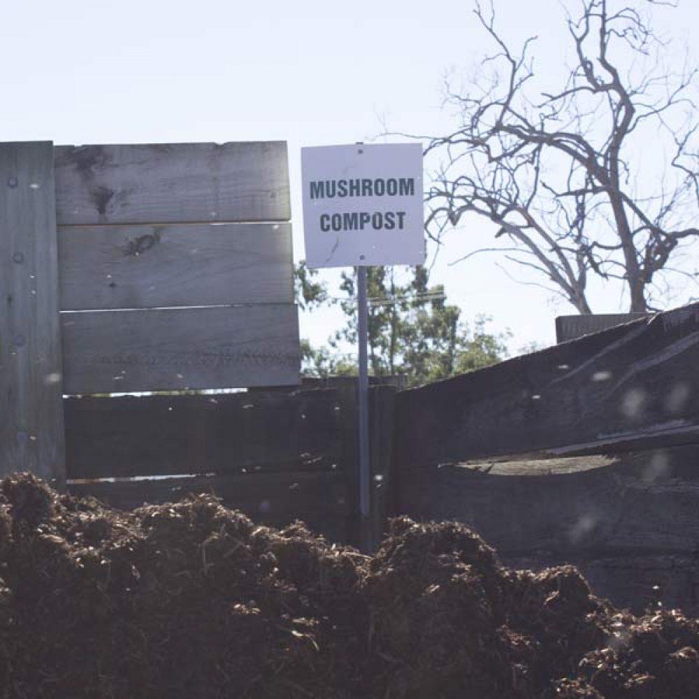 bulk-buy-mushroom-compost